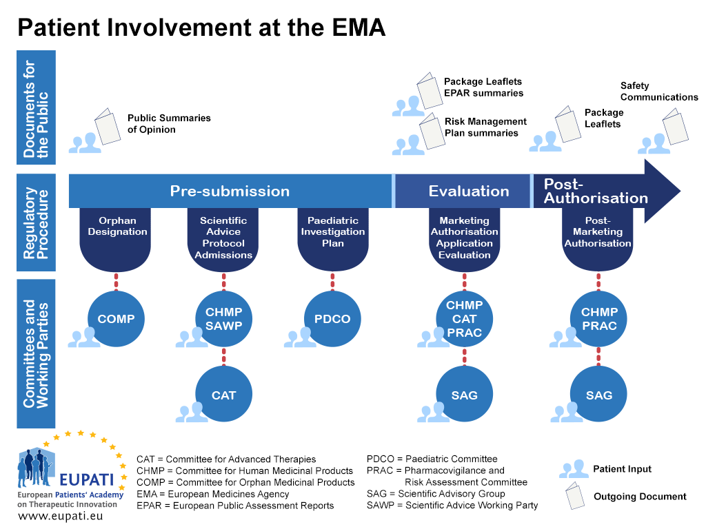 A diagram showing the various activities of the European Medicines Agency (EMA), the associated committees and work groups, the documents for the public that are produced, and patient involvement in those committees, groups, and documents.