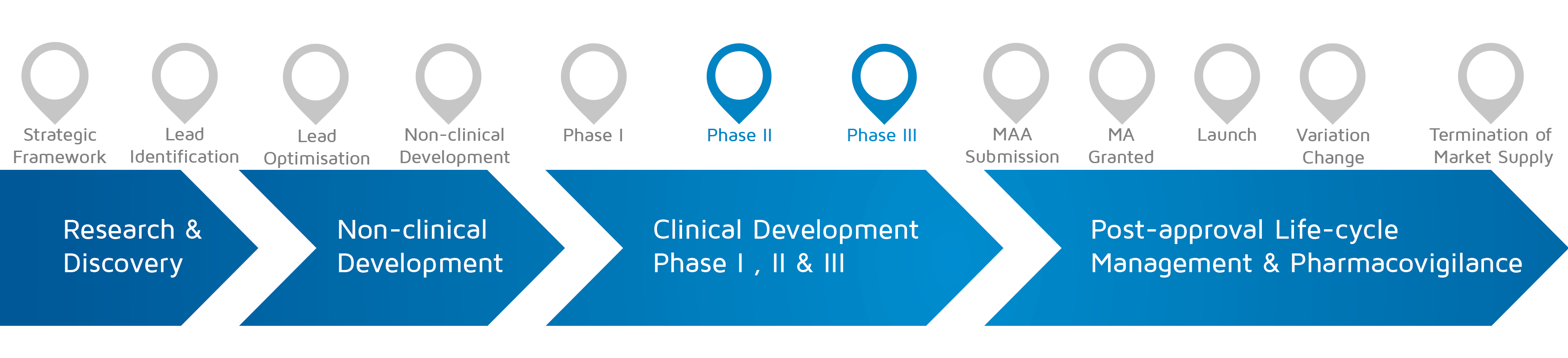 A visual representation of in which phase of medicines research and development process an activity takes place with Phase II-III highlighted.