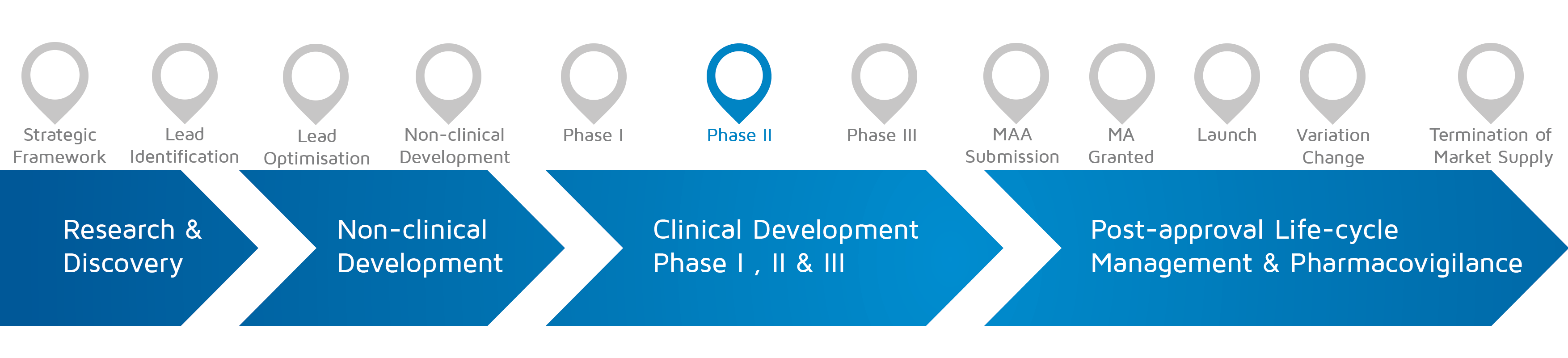 A visual representation of in which phase of medicines research and development process an activity takes place with Phase II highlighted.